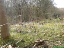 Coppice restorations