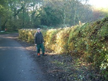 Hedge restorations