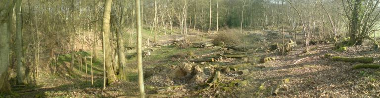 Panorama Coppice